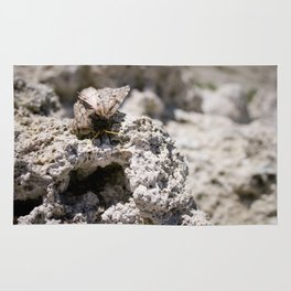 moth on tufa Rug