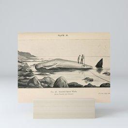 W Sidney Berridge - A Book of Whales (1900) - Figure 26: Stranded Sperm Whale Mini Art Print