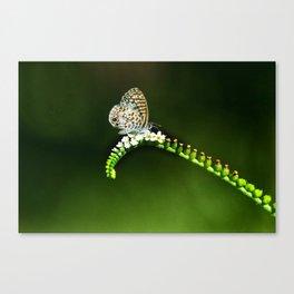 Tiny Beauty Canvas Print
