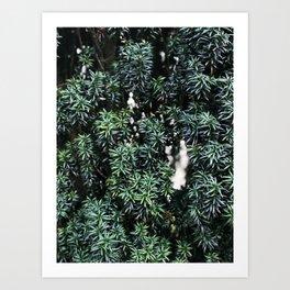 Evergreen tree Art Print
