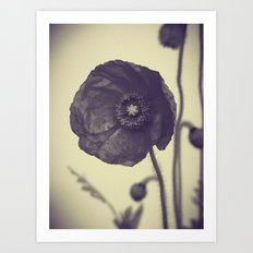Nature in Black and White -- Poppy -- Botanical Art Print