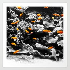 Orange Fish Art Print
