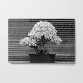 A Bonsai Olive Tree Thrives in a Japanese Garden Metal Print