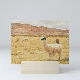 Llamas Mini Art Print