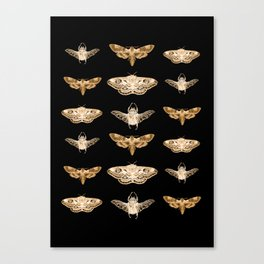 insects in gold - moths and beetles Canvas Print