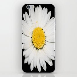Top View of a White Daisy Isolated on Black iPhone Skin