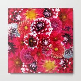 Dahlias flowers Metal Print