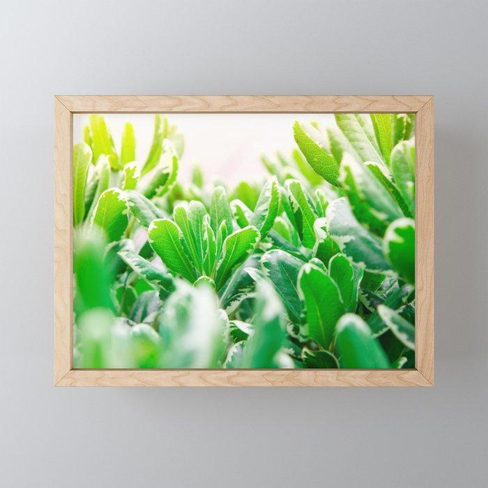 Nature photography garden II Framed Mini Art Print