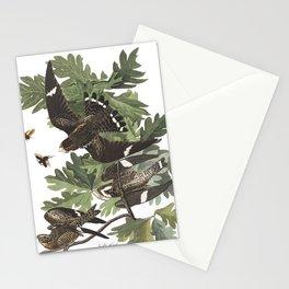 Night hawk, Birds of America, Audubon Plate 147 Stationery Cards