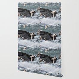 Gulls shop for Dinner Wallpaper