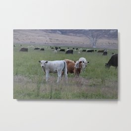 Yearlings Metal Print