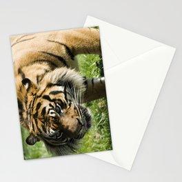 Sumatran Tiger Stationery Cards