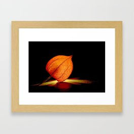 Lampionflower Framed Art Print