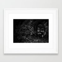 racoon Framed Art Prints featuring Racoon by Marina Andräde