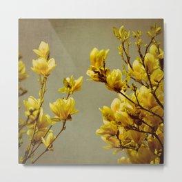 magnolias yellow Metal Print