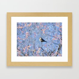 Little Bluebird in the Sun Framed Art Print