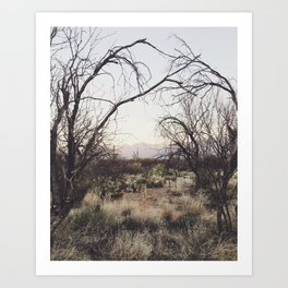 Coyote Canopy Art Print