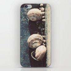 Snail family iPhone & iPod Skin