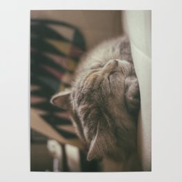 Sweet lullaby. Cat nap. Poster