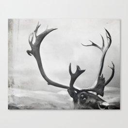 fig. 01   moose Canvas Print