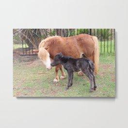 Horse Kisses Metal Print