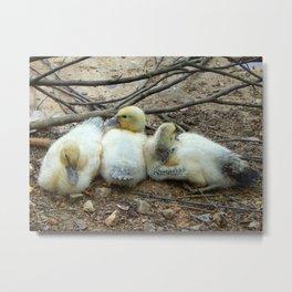 Duck Babies Metal Print