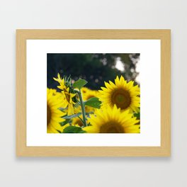 Turning Towards the Light Framed Art Print