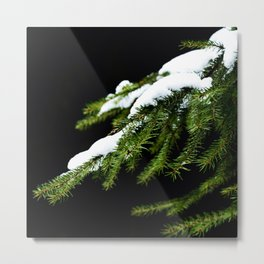 Pine tree branch covered with snow Metal Print