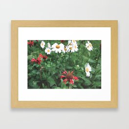 red and white daisies Framed Art Print