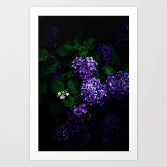 Hydrangea 03 Art Print