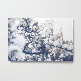 Cherry Blossom ❁ Metal Print