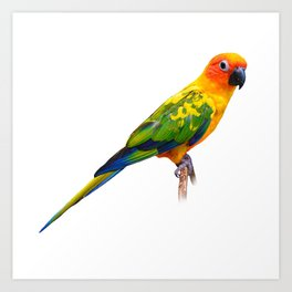 Birds Present Bird Lovers Sticker Nature Tropical Art Print