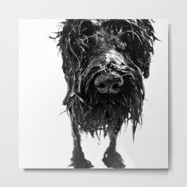 wet dog Metal Print