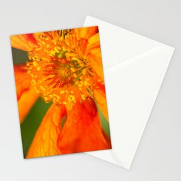 Orange Macro Flower Stationery Cards