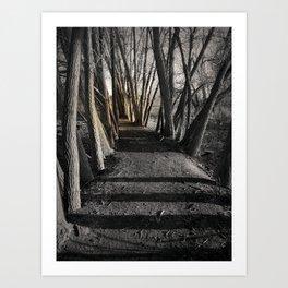 Path of Shadows Art Print