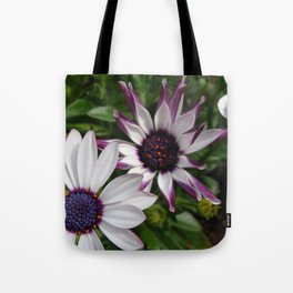 Purple and White Osteospermum Tote Bag
