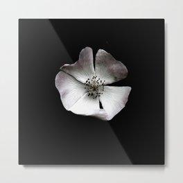 A delicate and sheer rosehip. Metal Print