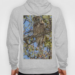 owl. Mexican spotted owl Hoody