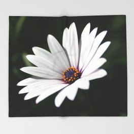 Daisy flower blooming close-up Throw Blanket