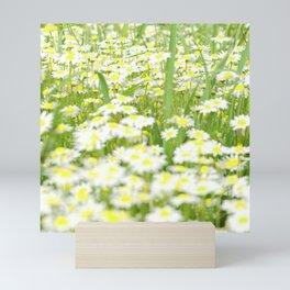 Field of daisies Mini Art Print