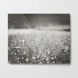 Morning Dew Nature Photography, Sparkle Bokeh Grass, Sepia Sparkly Photograph Metal Print