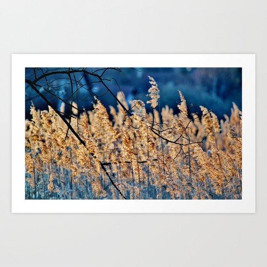 My blue reed dream - photography Art Print
