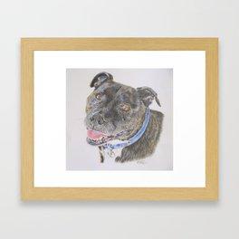 Staffy Framed Art Print
