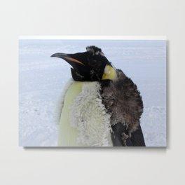 Molting Emperor Penguin Metal Print