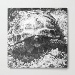 Tortoise at Dawn Metal Print