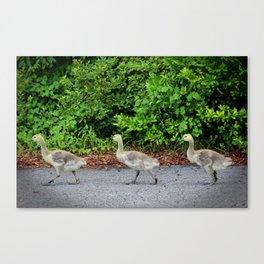 Three Goslings Canvas Print