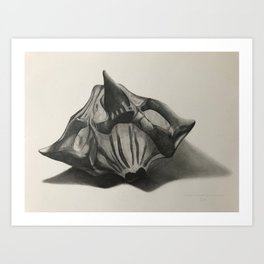 Water Chestnut Seed Art Print