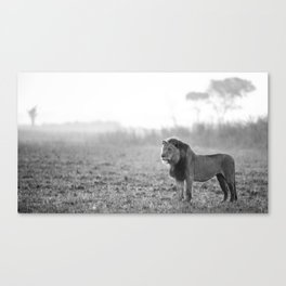 King Of The Plains Canvas Print