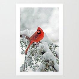 Cardinal on a Snowy Branch Art Print