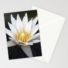 Longwood Gardens - Spring Series 37 Stationery Cards